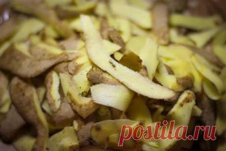 Удобрения из картофельных очисток: каким растениям полезны и когда, способы приготовления