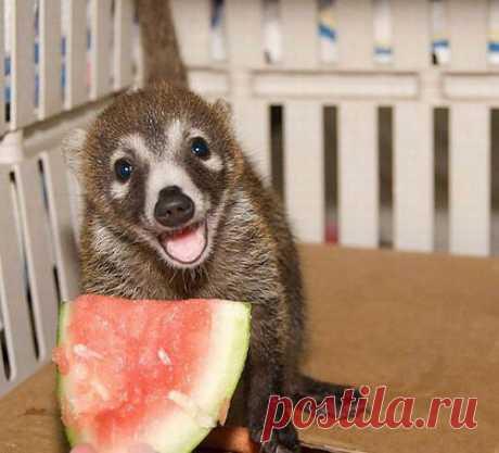 люблю арбузик я.....ягодка ты моя.....