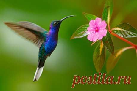Картинки про колибри (35 фото) ⭐ Забавник