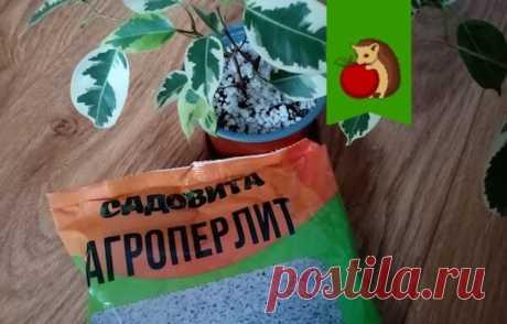 Перлит - мой настоящий помощник в цветоводстве. 5 вариантов как использовать и какого результата ожидать | садоёж | Яндекс Дзен