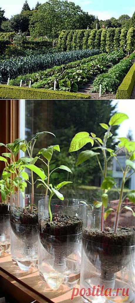 Уплотненные посадки, или какой овощ с каким дружит | Умелые ручки