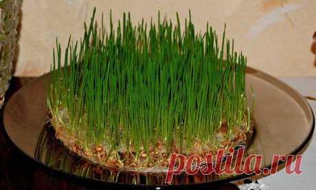 Состав и лечебные свойства проросших семян | Домохозяйки