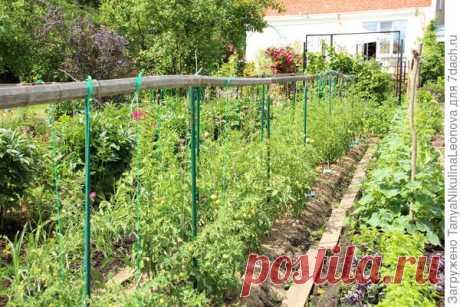 Шпалера для подвязки без единого гвоздя для сада и огорода
