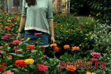 ТОП-10 цветов которые украсят любую дачу и сад » Notagram.ru Какие цветы посадить на даче, чтобы было красиво и уютно. Самые красивые цветы для дачи, сада, огорода, клумбы. Фотографии красивых цветов.