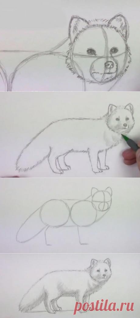 Поэтапное рисование карандашом животных для детей