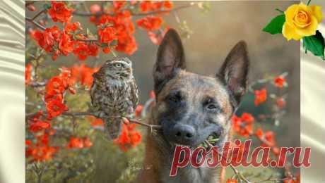 Дружба совы и собаки покорит ваше сердце — Калейдоскоп событий