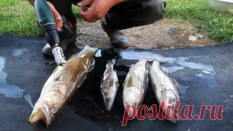 Чистим улов шуруповертом прямо на рыбалке за пару минут