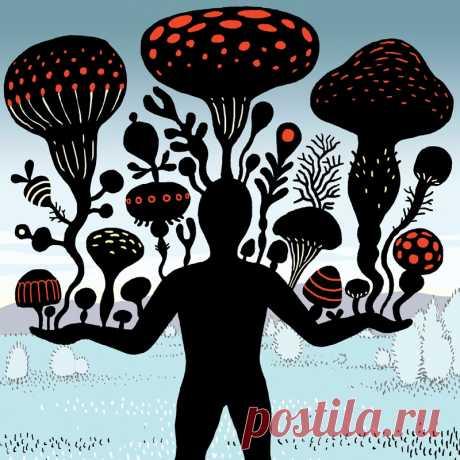 Как очистить организм от плесневых грибов Заболевания, вызванные плесневыми грибами, становятся очень серьезной проблемой. Большинство врачей не владеют терапией отравлений плесенью. Максимум, что они могут сделать, — назначить стероиды и опасные противогрибковые препараты.
