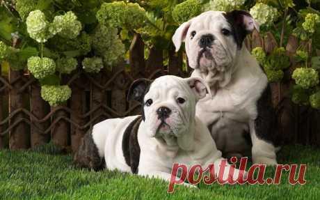 Самые дружелюбные и умные породы собак: 7 питомцев, идеально подходящих для семей с детьми