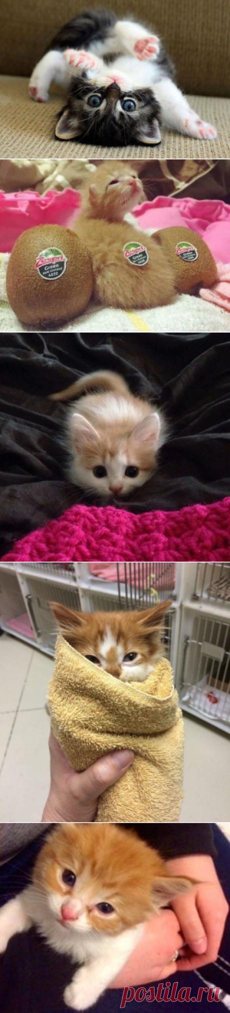 20+ самых милых котят на свете.