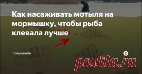 Как насаживать мотыля на мормышку, чтобы рыба клевала лучше Улучшить клев можно просто...