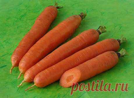 Как посадить морковь под зиму. Сорта моркови для подзимнего посева.