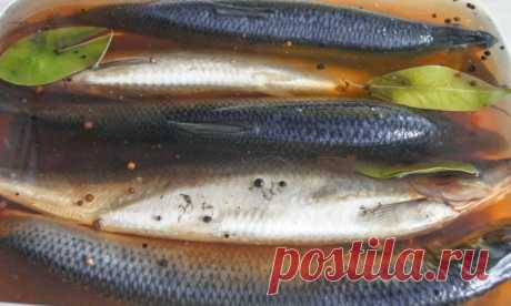Salting of a herring in house conditions – the recipe \/ Simple recipes