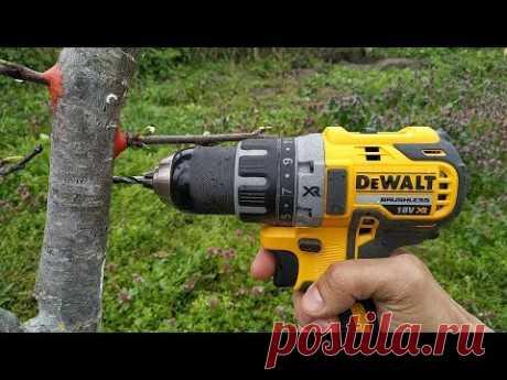 ПРИВИВКА ДРЕЛЬЮ / grafting plum drill