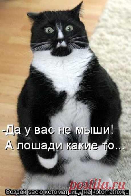 МУП Североморские Теплосети
