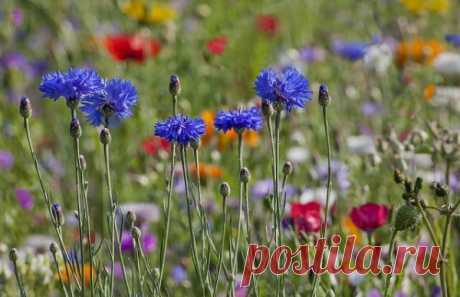 Wild flowers - natural beauty and harmony (photo)