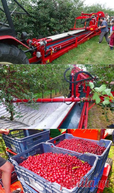 Стряхивающий и очищающий агрегат для уборки вишни и слив MAJA купить в Беларуси, цены и фото