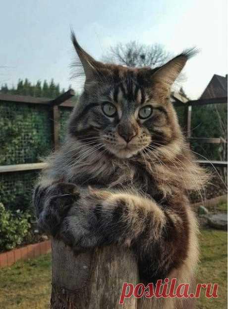 Какой котя красивый)