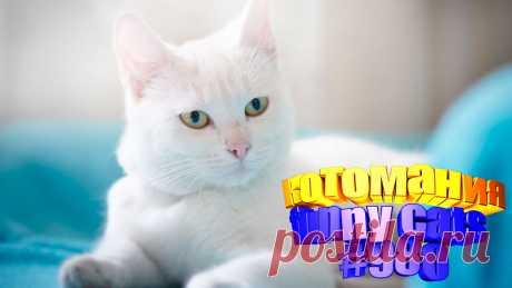 Вам нравится смотреть приколы про котов? Тогда мы уверены, Вам понравится наше видео 😍. Также на котомании Вас ждут: видео кот,видео кота,видео коте,видео котов,видео кошек,видео кошка,видео кошки,видео о котах, видео про кота, видео с кошками, говорящие коты видео, коты, кошка видео смешные, прикол, приколы о кошках видео, про котика, самые смешные животные, смешное про котов, смешные животные бесплатно, смешные кошки