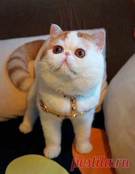 Кошка Снупи!