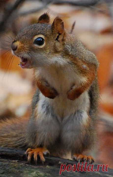 Sound the alarm! | I see this squirrel every time I walk on … | Flickr