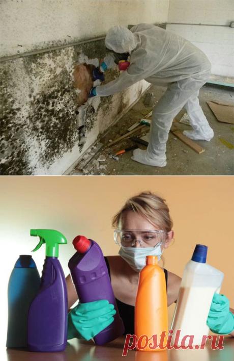 Плесень на стене в квартире: что делать и как уничтожить грибок разными способами