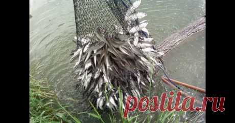 Ведро рыбы - как наловить пластиковой бутылкой за час - видео онлайн Видео: Ведро рыбы - как наловить пластиковой бутылкой за час - смотреть онлайн бесплатно. Рубрика: Видео о рыбалке. Добавлено пользователем Frost2016 в 2020 году. Вот когда такие заголовки я читаю, всегда вопрос - а реально такое возможно? Глянул видео и задумался - а почему нет? Технически рыбу...