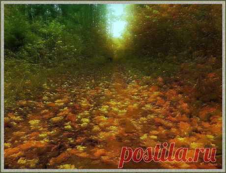 Осенних дней очарованье...