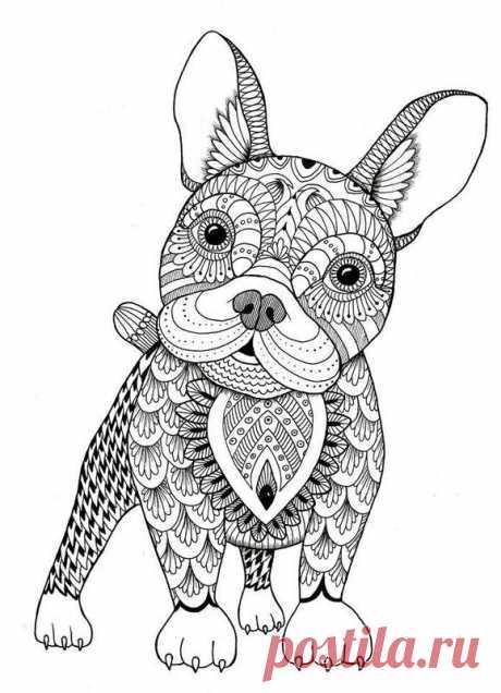 Антистресс раскраски с животными — Сделай сам, идеи для творчества - DIY Ideas