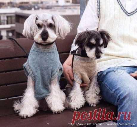 Вязание для собак, Пуловер для собаки