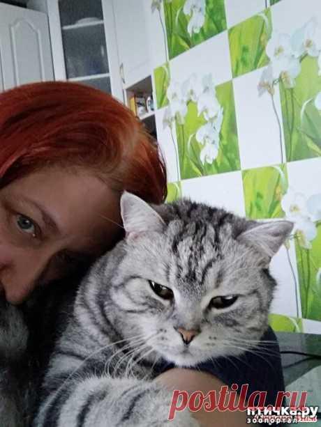 Как дать горькое лекарство кошке??? | ПТИЧКА.РУ | Яндекс Дзен