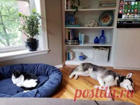 Котики продолжают захватывать лежаки собак . Тут забавно !!!