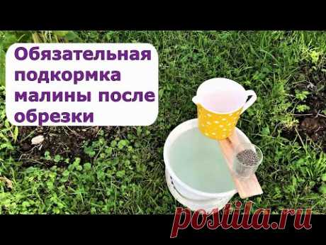 411. Важная подкормка малины после обрезки