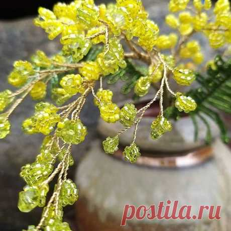 🇺🇸 In Russia you can findMimosaor SilverAcacia on theBlack Sea coast of the Caucasus. All the women get bouquets of tulips and mimosa branches forInternational Women's Day (March 8). 💛🏵🧡🏵💛 🌾 I know, that these Yellow Acacia buches bloom in California right now! 🏵 ❓ Do you have such a plant in your state or county? Which state/country is it? 🌎 __________🖋 🇷🇺 Мимоза произрастает на юге России. На 8 марта все женщины получают её в подарок. 💛🏵🧡🏵💛 🌾 Знаю...