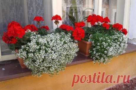 7 готовых схем для выращивания цветов за окном квартиры, как в итальянских многоэтажках