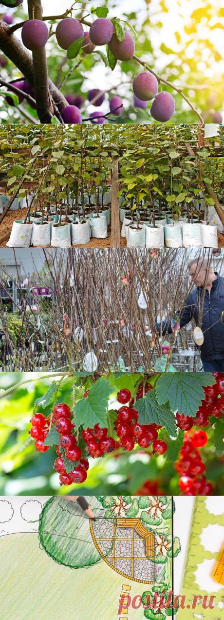 Сад, огород, участок и дом - как обустроить. Все для вашего сада и огорода, участка и дома.