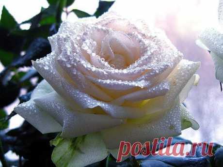 Женщина - это Цветок. А мужчина — Садовник! У самого заботливого садовника, самый прекрасный Цветок.