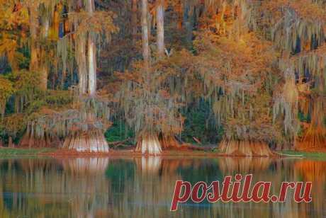 Долина кипарисов в Техасе | ТАЙНЫ ПЛАНЕТЫ ЗЕМЛЯ