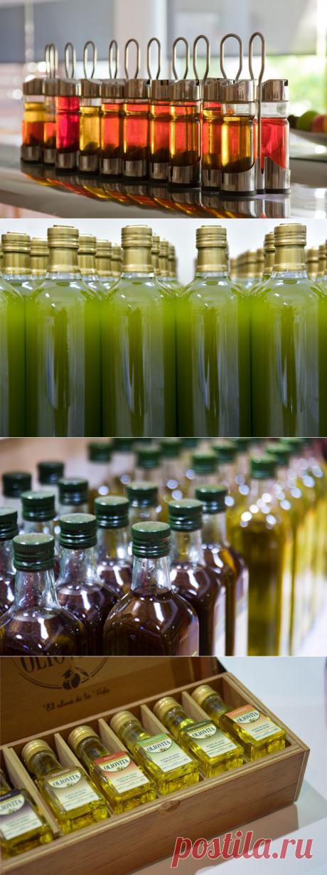 Оливковое масло: польза для организма и другие интересные факты