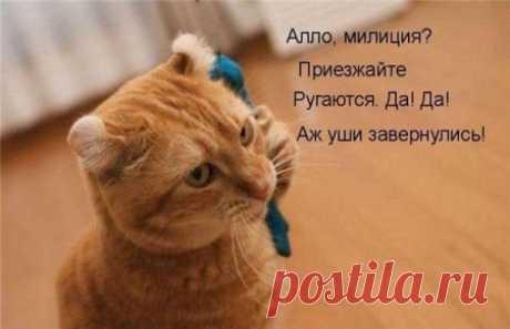 Прикольное зверьё;)) Котоматрицы