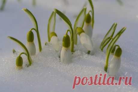 Фотография Проклюнулись. из раздела природа №6888180 - фото.сайт - Photosight.ru