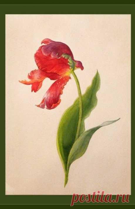 Урок рисования: тюльпан акварелью — Сделай сам, идеи для творчества - DIY Ideas