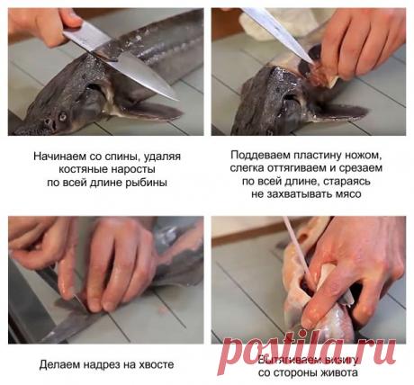 Как приготовить стерлядь в домашних условиях пошаговый рецепт