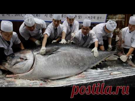 Как правильно разделать тунца. Разделка рыбы