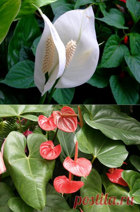 10 комнатных растений, которые приносят счастье