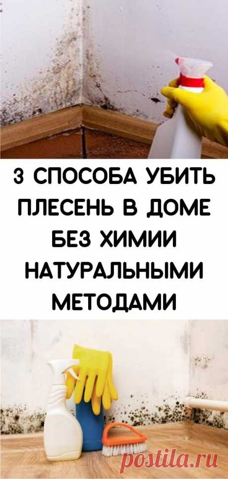 3 способа убить плесень в доме без химии натуральными методами