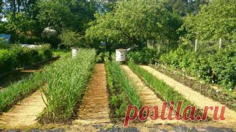 Простой способ уничтожения сорняков на дорожках