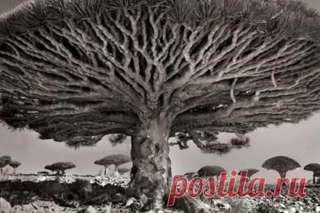 Фотограф 14 лет снимала старейшие деревья в мире  | Блог fkmrf123 | КОНТ