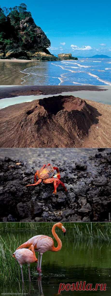 Галапагосские острова | НАУКА И ЖИЗНЬ
