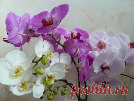 Орхидеи. Основные принципы правильного ухода - YouTube
